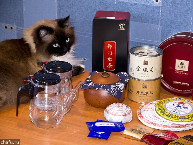 Кот инспектирует посылку